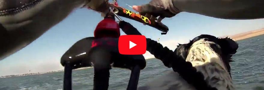 De kitesurfers hond